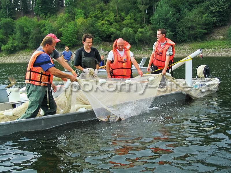 Pokorn s t nets enterprise purse pelagic seine nets for Purse seine fishing